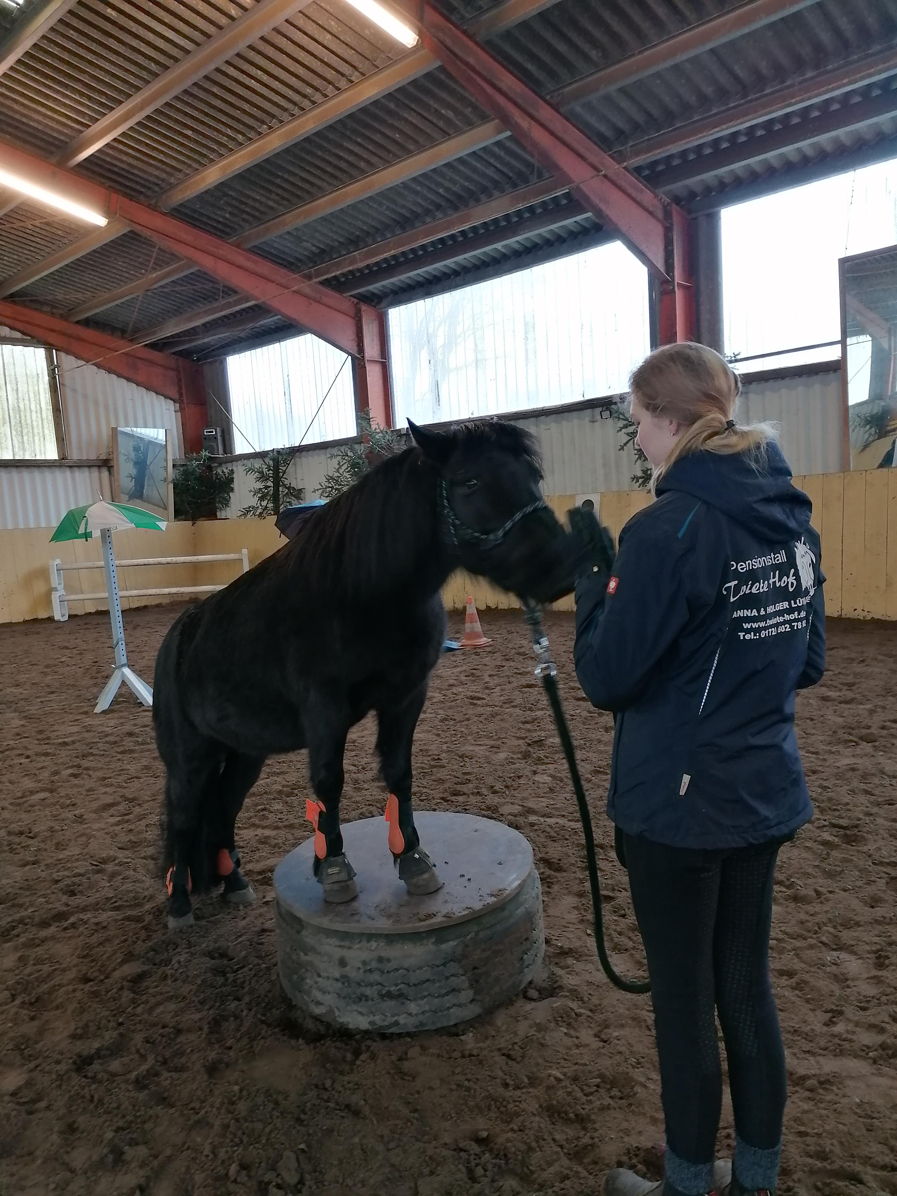 kleine Zirkuslektionen dürfen auch nicht fehlen- die Ponys haben ihren Spaß