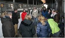 Jungzüchter des Holsteiner Verbandes bei praktischen Übungen in Stallgasse im Rahmen eines Englischseminars. Foto: Holsteiner Verband