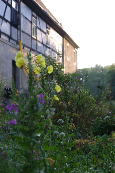 Das Wohnhaus vom Garten aus
