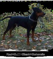 RED BULL, BLACK BOHEMIA