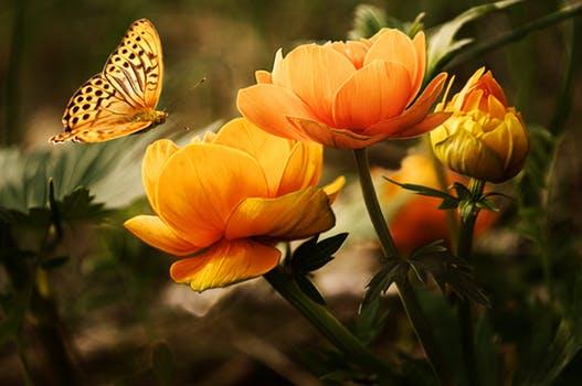Mai flowers-background-butterflies-beautiful-87452.jpeg