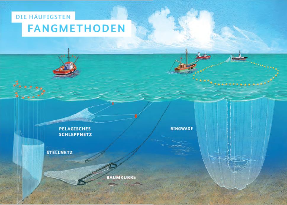 Abb. aus: Entdecke das Wasser, Herausgeber: Bundesministerium für Ernährung und Landwirtschaft, 07/2014