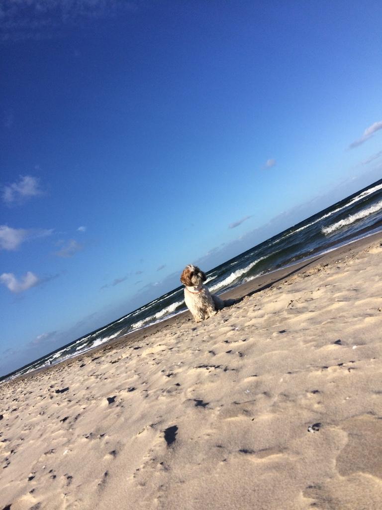 Erholung und Entspannung für Mensch und Tier
