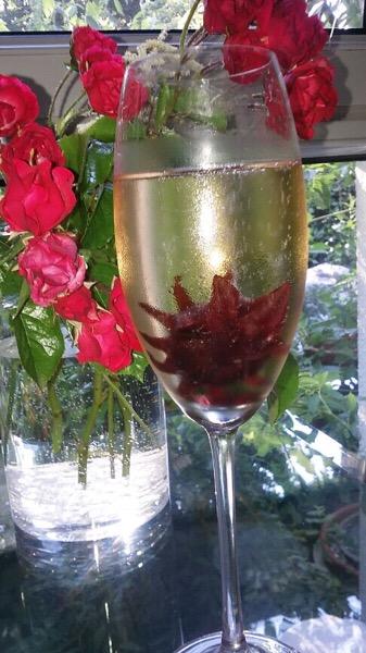 Glas Sekt mit Hibiskusblüte