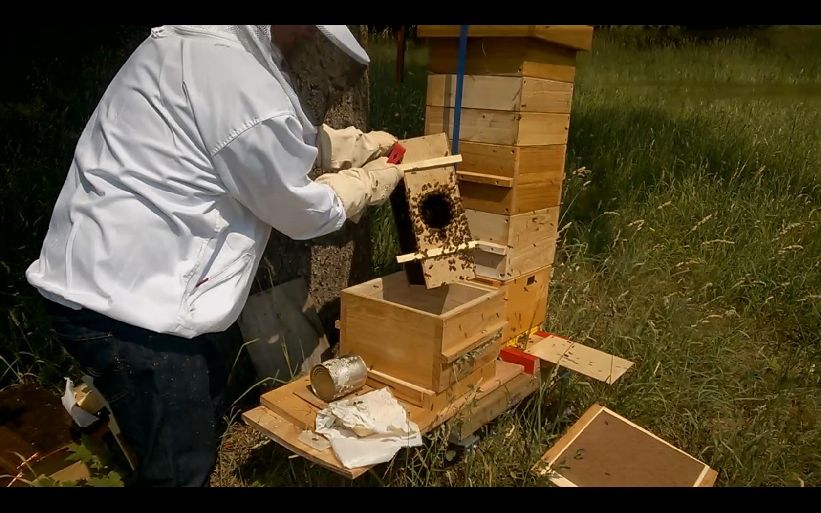 Bei dem prallen Sonnenlicht drängten die Bienen aber schon gewaltig heraus aus der Box und ich war sofort von verwirrten Bienen umschwärmt.