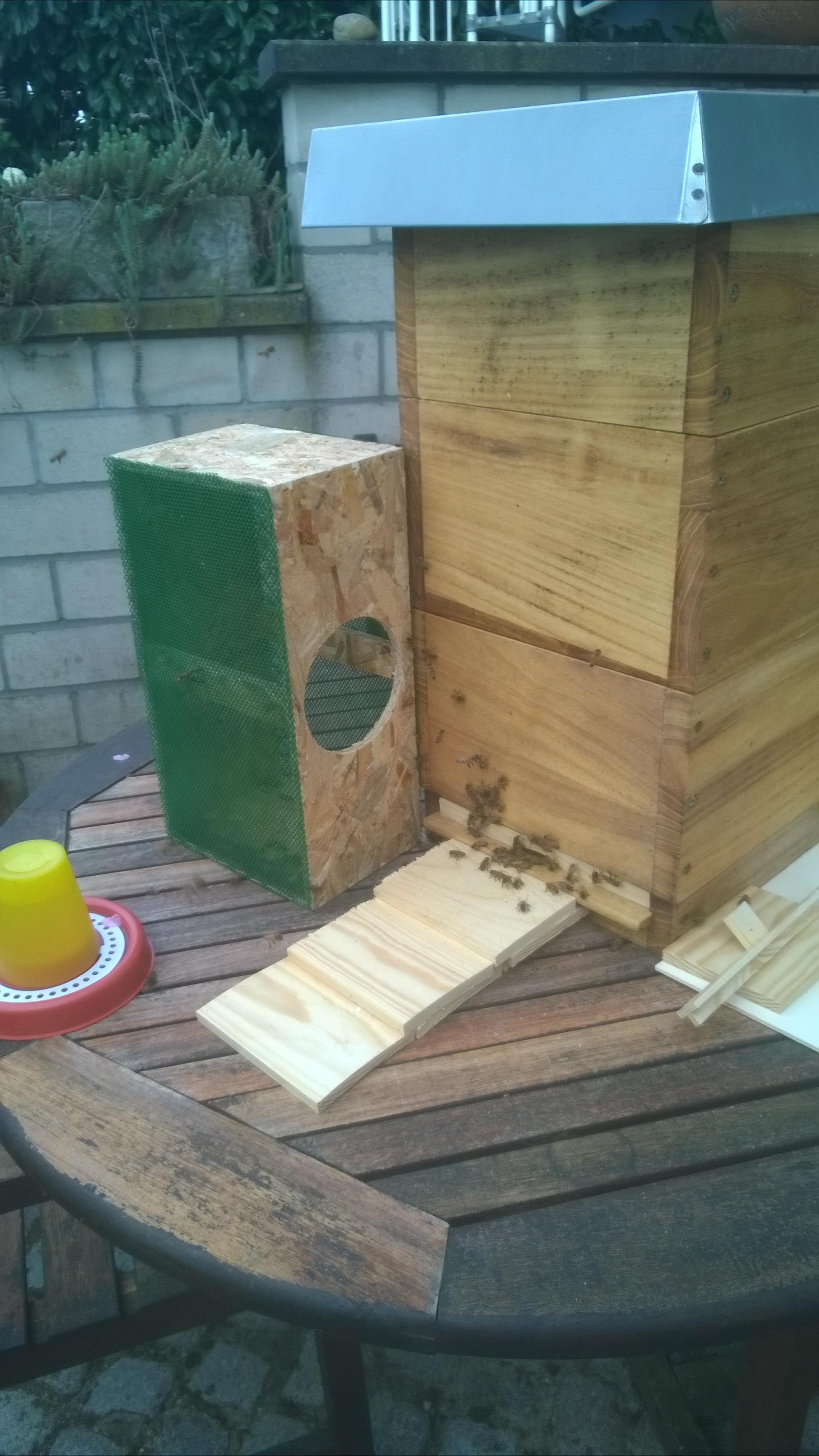 Einzug der Bienen in die Mini-Plus-Beute