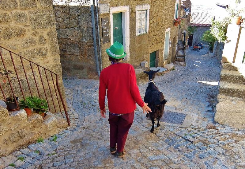 Dioe Ziege wird nach Hause gebracht