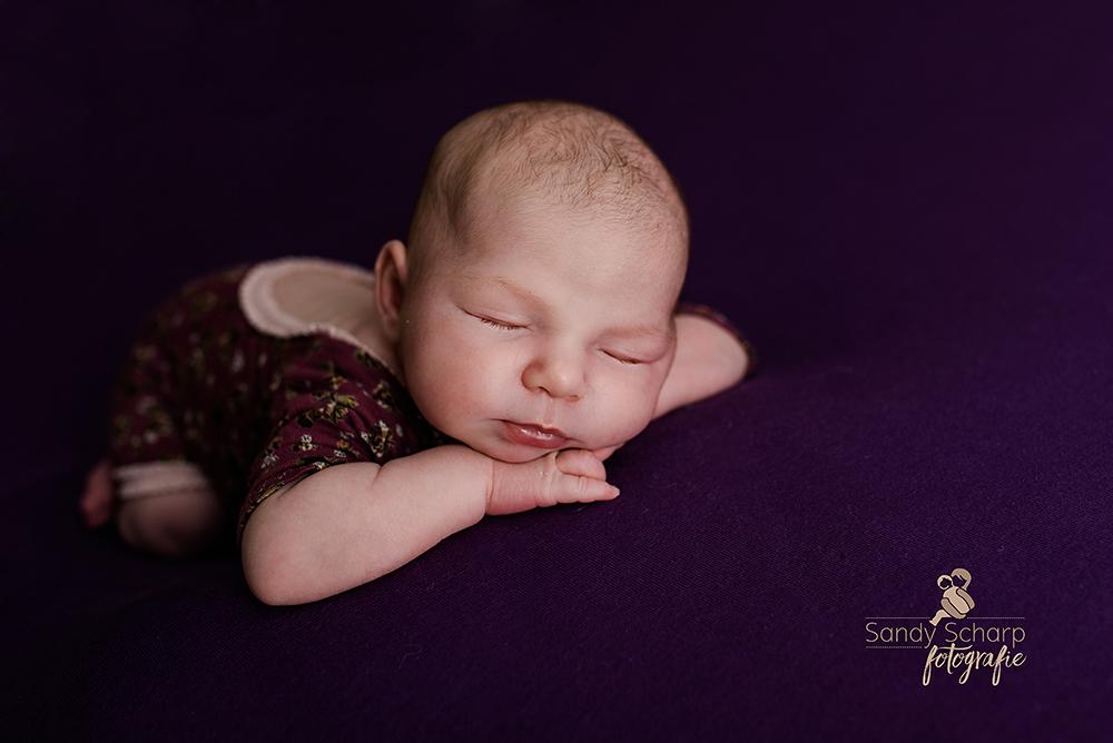 Fotograf zwickau, Newbornfotografin Zwickau, newbornfotografie, Dresden, Leipzig, Chemnitz, Sachsen, Babybauch, Babyfotos