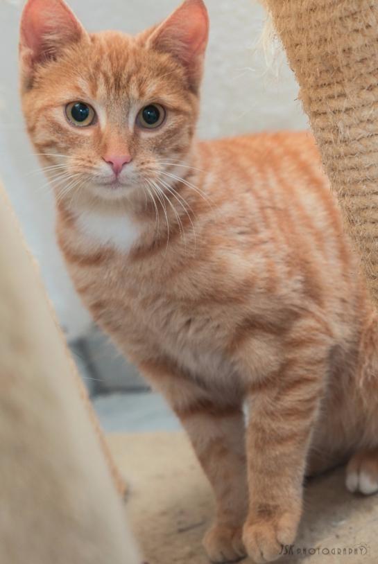Jackson, der eine Katze ist und jetzt Greta heißt