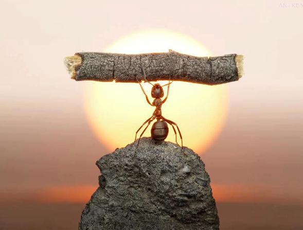 Eine starke Vision setzt ungeahnte Kräfte frei!