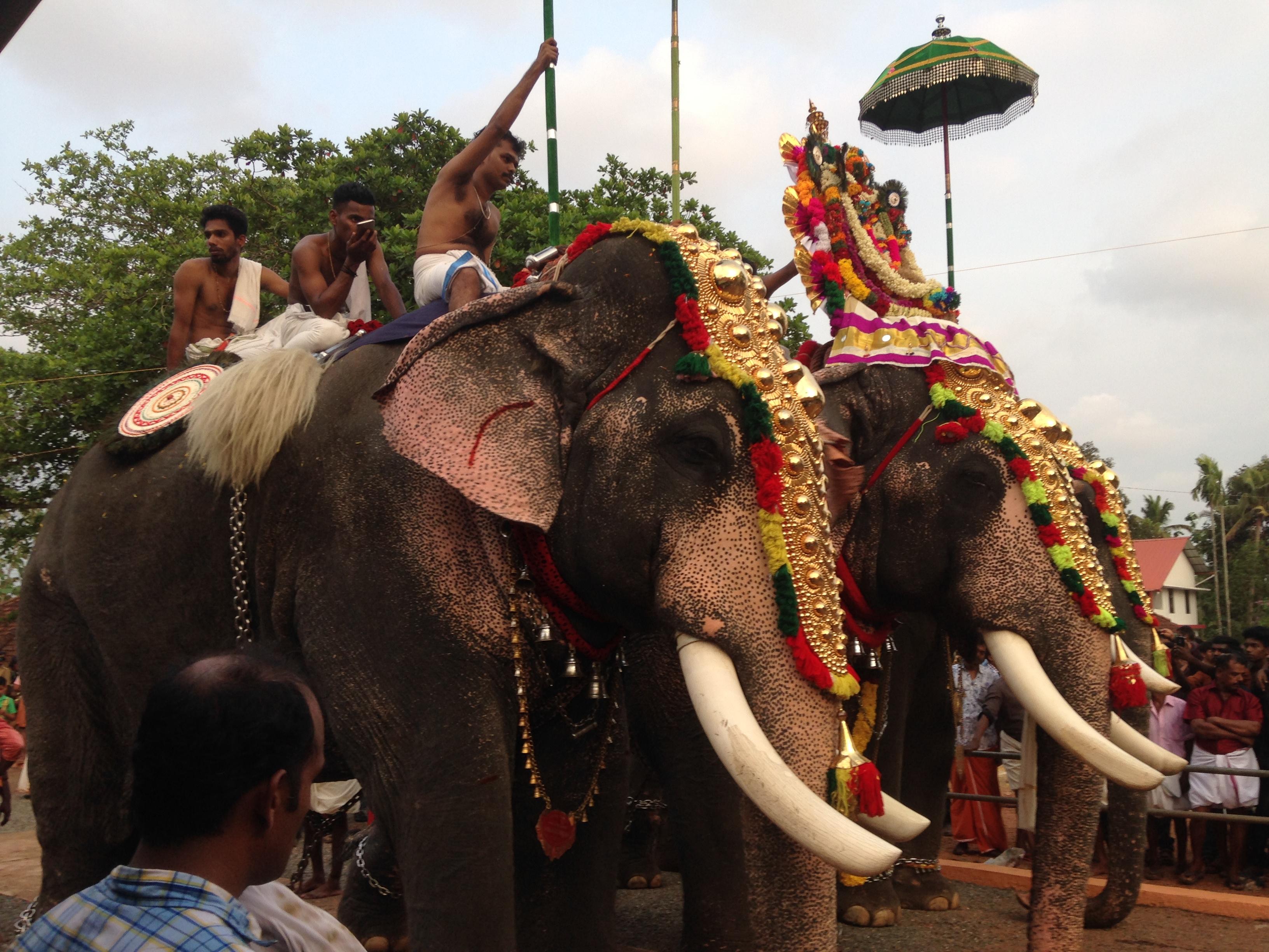 Das große Elefantenfest
