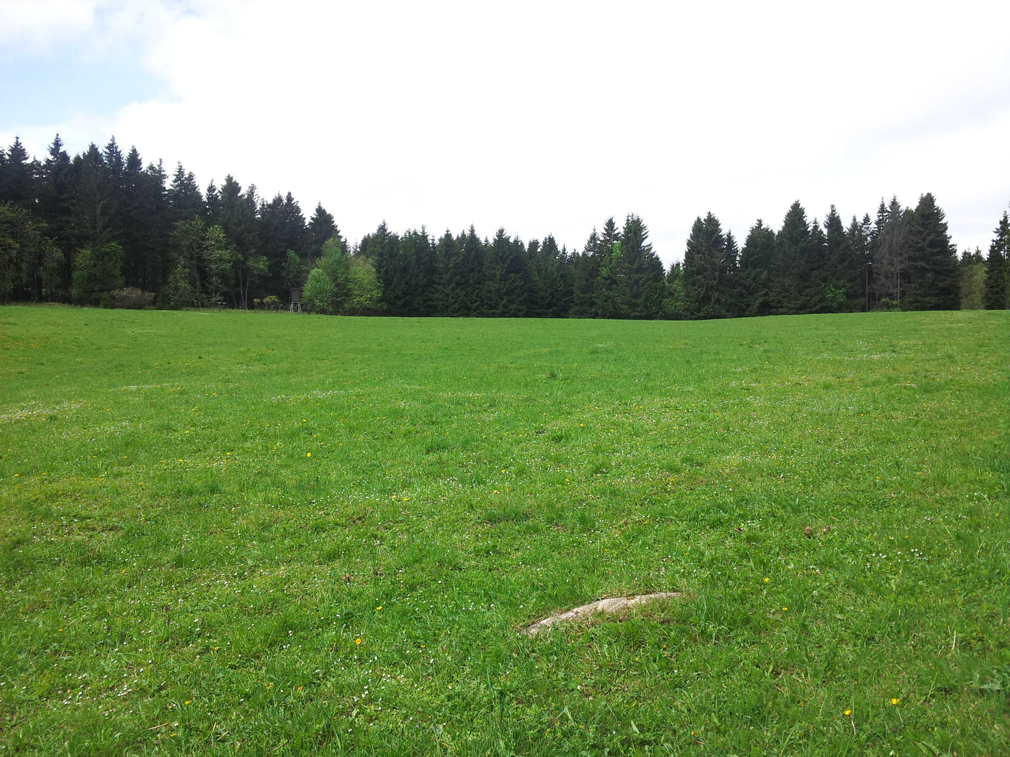 Bergwiese bei St.Andreasberg
