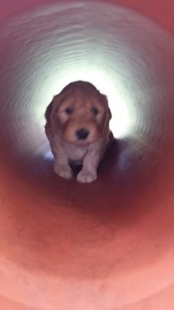 Licht am Ende des Tunnels ;)