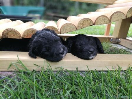 Unter der Hängebrücke kann man super schlafen!