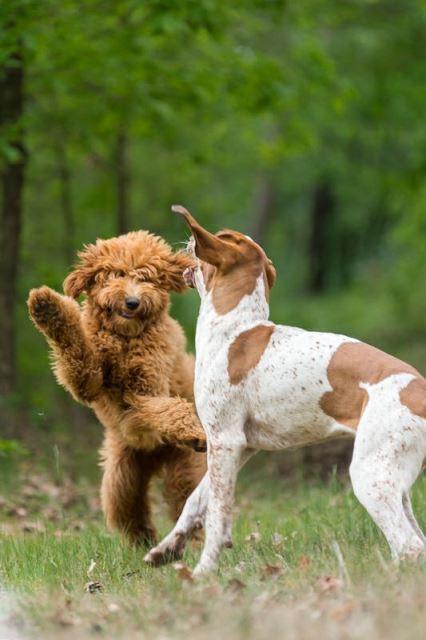 """""""Braunbär""""-Käthe in Aktion ... Fotos für die Hundeschule;)"""